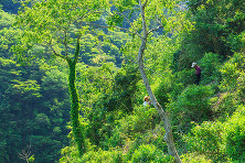 川又日浦山自然生え園